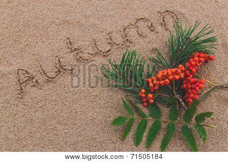 Rowan On The Sand