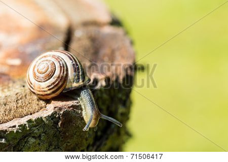 a small snail on a tree trunk poster