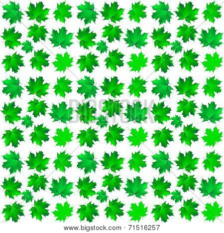 Pattern Of Green Maple Leaves