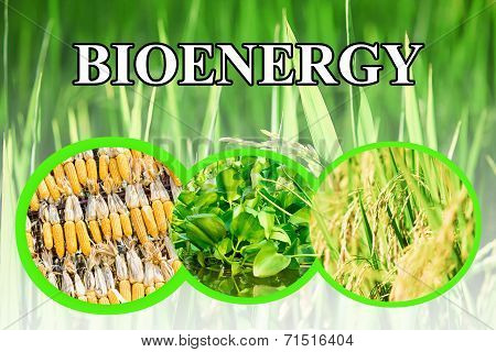 Bioenergy wording for background
