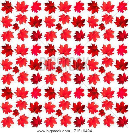 Pattern Of Red Maple Leaves
