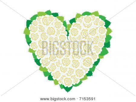 White Roses Herat
