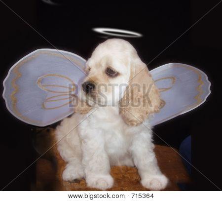 ACS angel