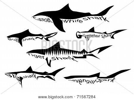 shark species. silhouette of sharks isolated on white poster