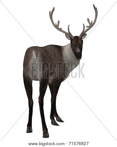 3D Reindeer