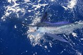 Beautiful white marlin real bill fish on atlantic water sport fishing poster