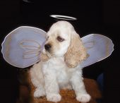 puppy with angel wings poster