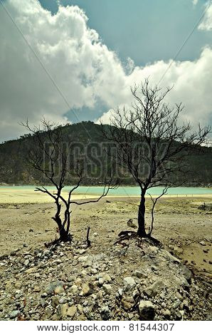 Barren Looking Tree On Rocky Sulfuric Floor Of White Crater Or 'kawah Putih' Crater Of Ciwidey, Indo