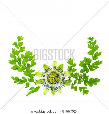Passion Flower (passsiflora) And Crossed Young Green Fern Branches Composition Is Isolated On White