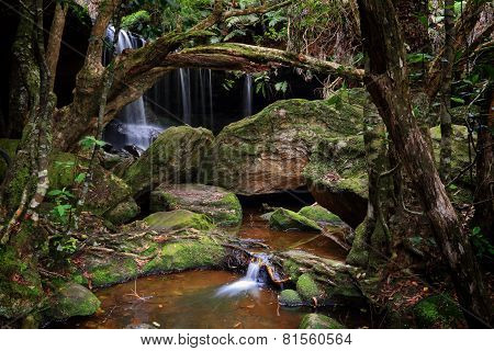 The Grotto falls at Fitzroy Falls within Morton National Park the largest in NSW. A bushwalk to the Grotto a tranquil area with lush undergrowth moss covered rocks and the sounds of nature poster