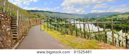Beautiful View To Vineyards At Mosel River