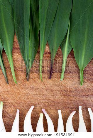 wild garlic Allium tricoccum on wood background