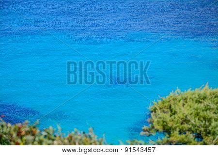 Plants By Capo Testa Shoreline