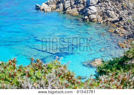 Rocks And Plants By Capo Testa Shoreline