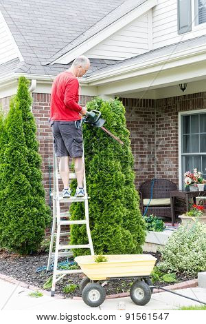 Gardener standing on a stepladder in front of a house trimming an Arborvitae or Thuja tree with a hedge trimmer or small chain saw to maintain its ornamental shape poster