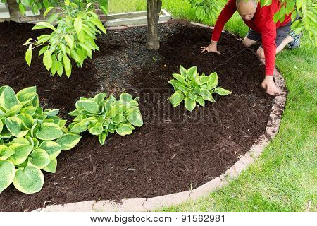 Gardener Doing Mulch Work Around The House