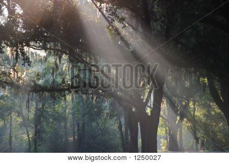 Slanted Rays Of Light