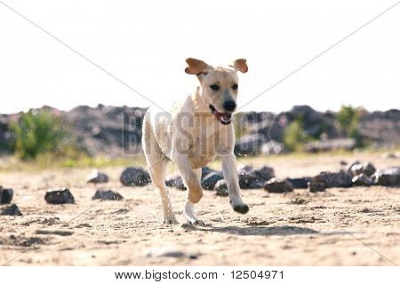 juego de perro feliz en la tierra