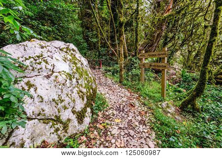 Scenic trail in a dense forest, the yew-and-boxwood tree grove, the national Park in Sochi is a popular Hiking route, Khosta, Russia.