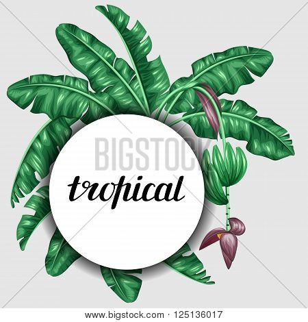 Background with banana leaves. Decorative image of tropical foliage, flowers and fruits. Design Image for advertising booklets, banners, flayers, cards.