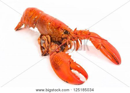 Whole cooked lobster isolated on white featuring bright red color.