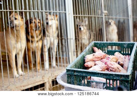dogs in cages waiting for feeding. stray dogs in the dog shelter