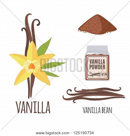 Superfood vanilla set in flat style: vanilla beans, flower, powder. Organic healthy food. Isolated objects on white background. Vector illustration