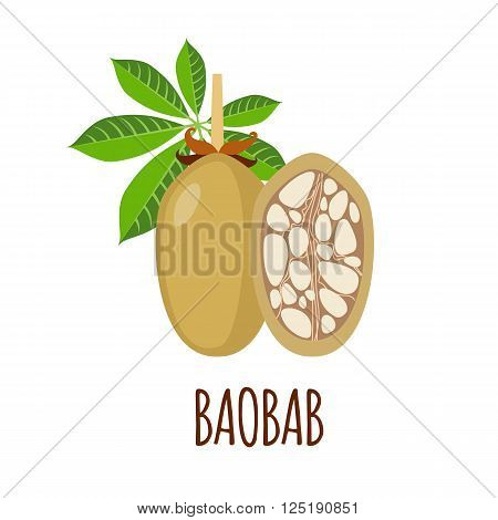 Baobab vector logo  in flat style. Baobab icon. Isolated object. Superfood baobab fruit. Vector illustration.