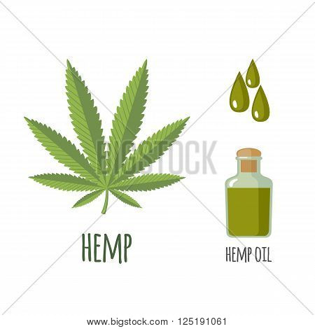 Superfood hemp set in flat style: hemp leaves, oil. Organic healthy food. Isolated objects on white background. Vector illustration