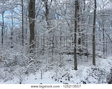 Winter Snow in Stamford, Connecticut in USA