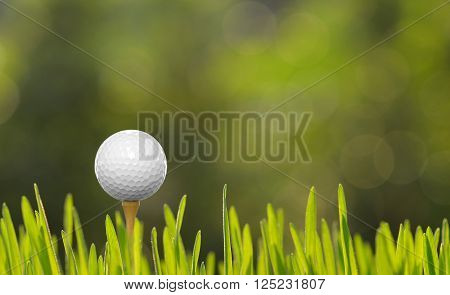Golf ball on green grass with golf course background