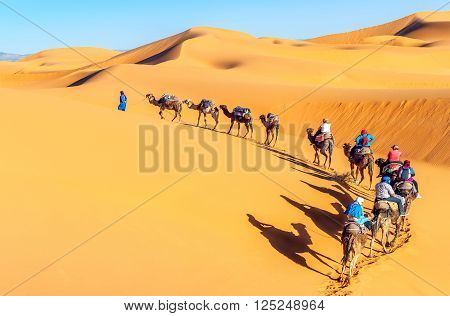 Camel caravan on the Sahara desert, Morrocco