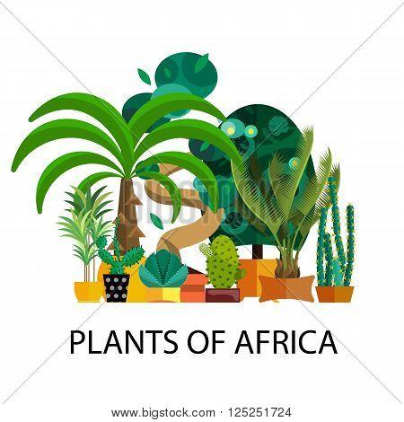 Desert flowers.Exotic plant, bush, palm tree and cactus vector set.Desert potted flowers.Flat illustration of  desert flowers.Houseplants from desert.Set of flowers in pot.Tropical and desert flowers