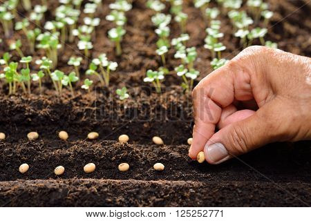 Closeup of farmer's hand planting seeds in soil