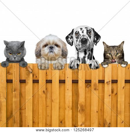 dogs and cats look through a fence -- isolated