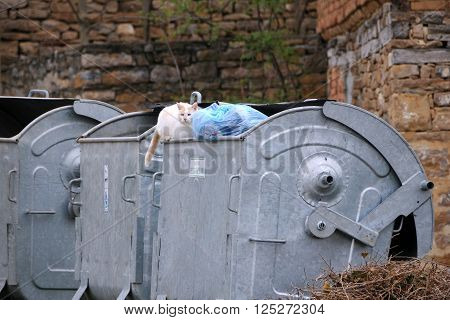 VELIKO TARNOVO, BULGARIA - MARCH 15, 2016: Stray cat sits on the garbage container