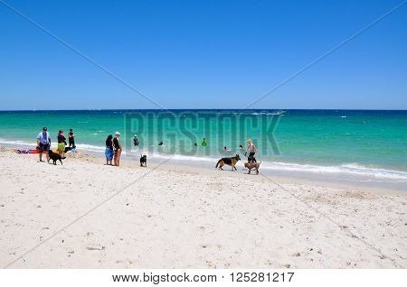 HILLARYS,WA,AUSTRALIA-JANUARY 22,2016: People and their pets on the animal exercise beach with the Indian Ocean waters in Hillarys, Western Australia.