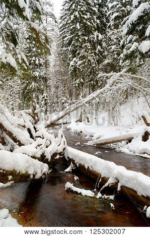 Winter river valley landscape with beautiful snowcovered fir trees