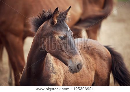 Portrait of the foal near its mother at summer time