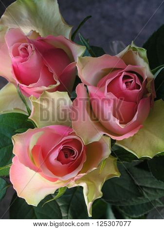 three rose buds in pastel red and green colour ** Note: Visible grain at 100%, best at smaller sizes