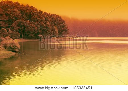 Artistic golden colorful landscape of forest lake