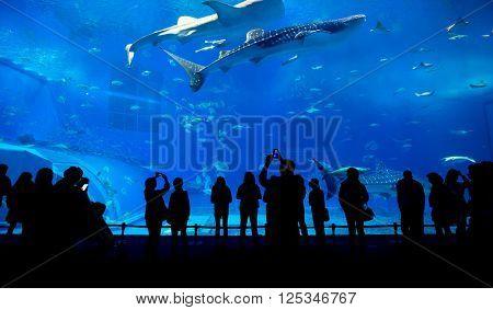 Oceanarium in Japan
