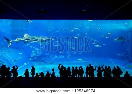 Aquarium in Japan