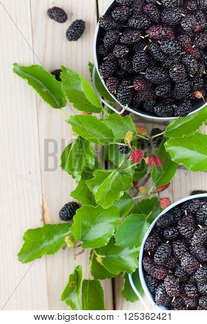 Fresh black mulberries in a small buckets. Shallow dof