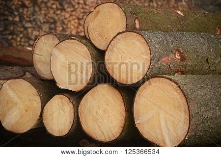 sustainable energy supplier Wood - logs closeup