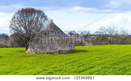 Winter in Apulia. Old trullo house and trees in country near Bari - apulia. Italy