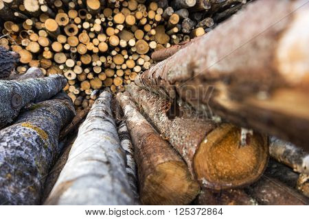 stack of trunks of pine trees at sawmill