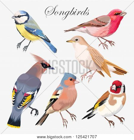 Vector set of colorful high detailed songbirds