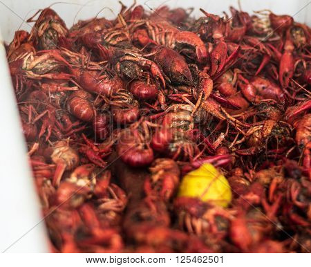 A cooler full of spicy Louisiana crawfish