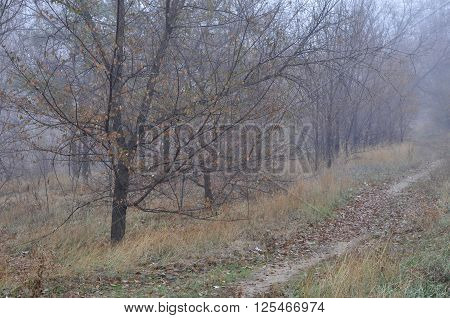 Misty autumn view with wet trees fading in air perspective